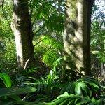 Wharepuke Subtropical gardens Kerikeri