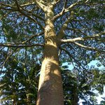 Kerikeri - Wharepuke Subtropical Gardens