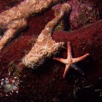Tropical Sea Star