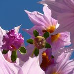 Flowers at Wharepuke in Kerikeri NZ