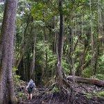 Primeval Yela Forest