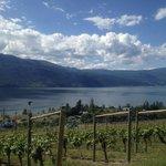 Vineyard overlooking Lake Okanagan