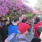 Listening to our tour guide next to the bougainvillea