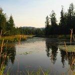Otter pond