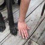 Wilson's paws