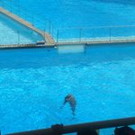 Piscina delfini