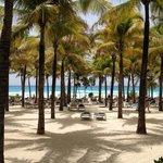 Tumbonas en el palmeral