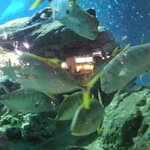 Aquarium Trocadéro