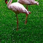 Flamingoes in the entertainment/dining area