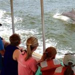 dolphin following the tour boat