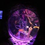 One of the aquarium