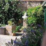 Veronica's bush in the garden