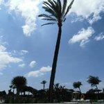 le palmier de la piscine