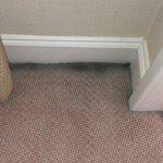 Dirty carpet.