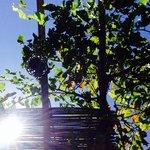 grape in aroma garden