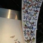 Butterfly banner near the Butterfly Pavillion