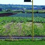 Gorgeous Fields
