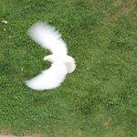 Doves outside window