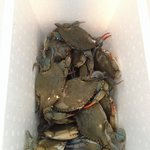 """The final haul of """"keepers"""" from our 2 hour outing."""