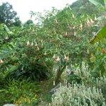 Garden at Rafjams