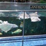 Fish and Stingrays