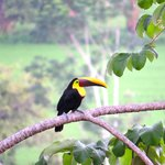 Toucan - view from balcony