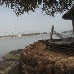 Photo of Chez Ibra Sow l'ile aux pelicans