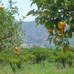 The sea of oranges
