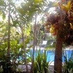 la piscine depuis la terrasse de la chambre