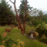 Beautiful gardens and 'guests' enjoying the morning