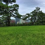 Incredible grass