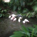 beautiful flamingo