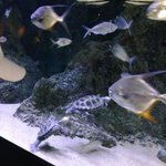 Pine Knoll Shores Aquarium