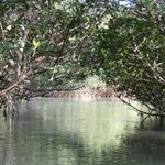 Blue Lagoon Mangrove tunnel