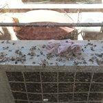 sterco di piccioni sul balcone