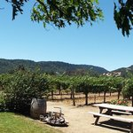 Panorama of the vines at O'Brien