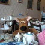 Scooby Doo loved it!