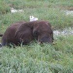 Elefant der vom Gras einer Insel im Chobe frisst. Vom Boot aus