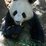 bamboo anyone