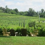 Sit back and relax while looking at the vineyard.