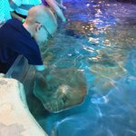 patting stingrays who seemed to love attention