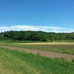 Fields!