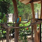 Parrots by snack bar