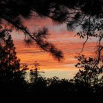 Stone Creek Campground Sunset - looking up through the trees