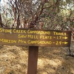 Some of the trails that start at Stone Creek Campground
