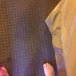 Roach on floor of room