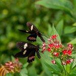 Paradise Butterflies