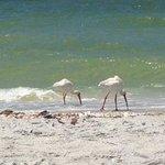 wildlife on the beach