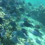 Reef at Icacos Island