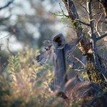 Kudu browsing